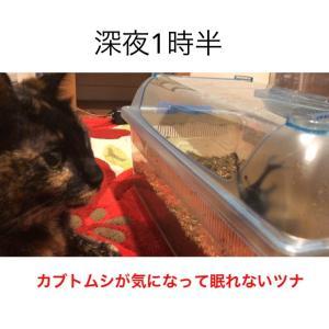 ウチのサビ猫☆(ゝω・)v