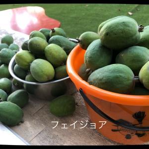 うちの庭で勝手に育ったフルーツ。(笑)