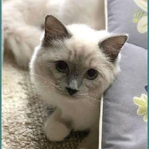 No.2783子猫のミルクちゃん他