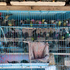 インドネシア人、色々質問してくる&可愛そうな鳥達