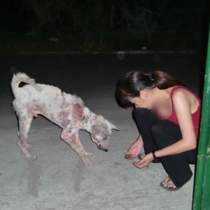 犬好きの方よろしくお願いします。