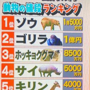 動物値段ランキング 動物園するのって大変
