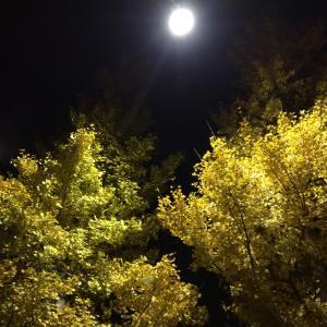 月夜の銀杏