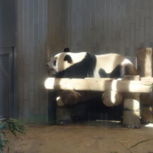 久しぶりに上野動物園へ