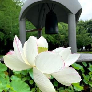 平和の鐘と蓮の花