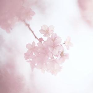 ★ 初めての四月・・・ ★