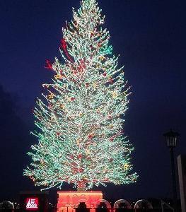 【北海道旅行番外編】クリスマスツリー
