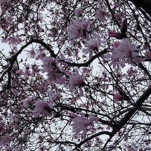 散歩しながらお花見(桜じゃあないけど)