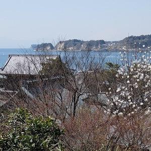 早春の鎌倉