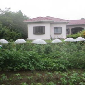 「梅雨に入るトマトの苗に傘挿せり」