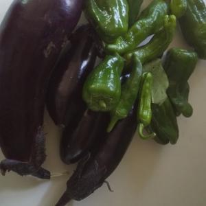 初採りの茄子シシトーを炒めけり