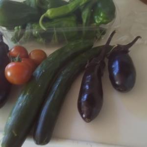 お日様の匂ふトマトを初採りす