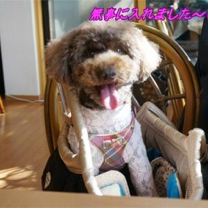 自宅改造カフェ、犬はお膝の上のみOKで床に下ろすのはNG!!