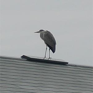 鳥さん!君の名は??