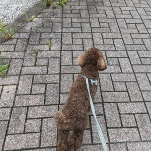 糞尿は家で済ませてからお散歩してくださいだってさ~!!