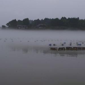 夕霧の中居湾