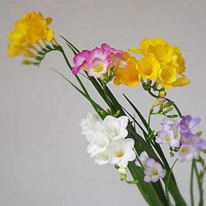 『優雅な春の女神』という、エアリーフローラ