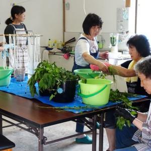 藍の生葉染め教室《丸葉と長葉の比較》その結果