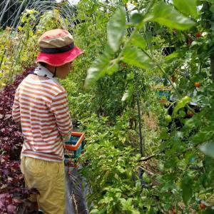 無農薬野菜収穫&BBQ @コトトキ農園さん