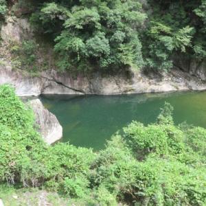 大千瀬川にも特大のあいつが泳いでおりました