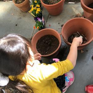 あんふぁん公式ブログ更新☆『まだ間に合う!子供といっしょに春のお花を育てよう』