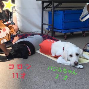 いわき街なかコンサート【日本盲導犬協会仙台訓練センター】PR犬がやってきた♪