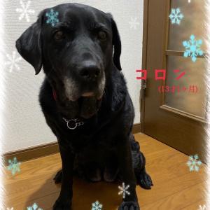 盲導犬引退犬と暮らす♪