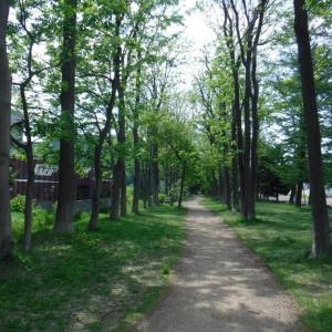 札幌市の緑道めぐり⑤ 北郷緑道 & 川下公園のライラック