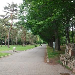初夏の円山公園を訪れました