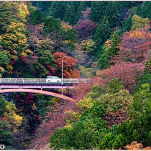 攻橋の紅葉