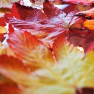 美味しい秋・・・