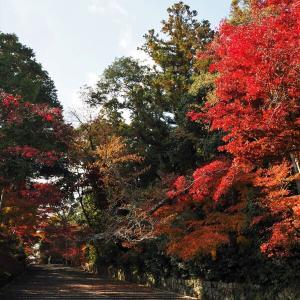 令和2年 秋の京都へ・・・