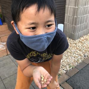 枝豆を撒きました