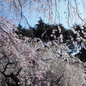 年金へ孫十人を祝う春