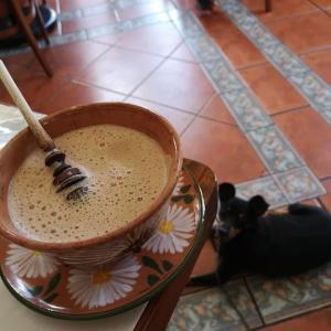 犬同伴でレストラン・カテドラル。