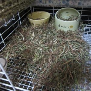 牧草の茶色問題。
