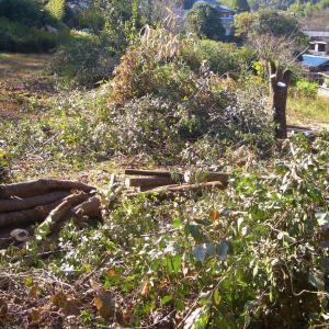本格的伐採スタートだが最悪の蔓だった。