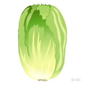 白菜に防虫ネット、でも無残な姿になった。