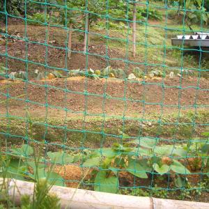 雨の中の傾斜地菜園Ⅰ
