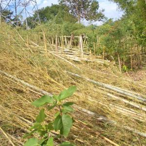 真夏に竹の伐採を始めた。
