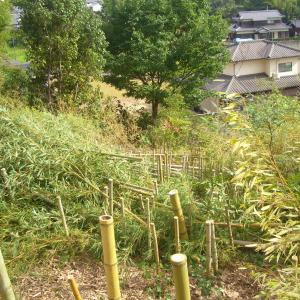 竹の枝打ちから焼却。熱い暑い🔥