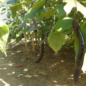 現在収穫する野菜は11種類もある😋
