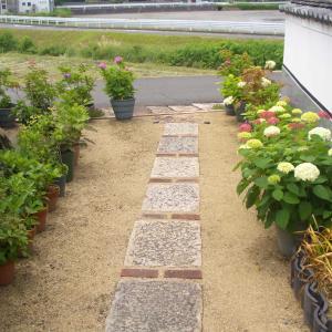 倉敷美観地区と本格的にアジサイが咲き始めた。