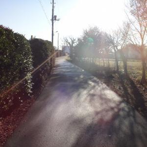 冬の谷津田 以前の定番コース