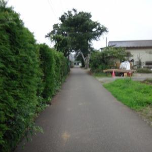 梅雨の合間の谷津田ポタ