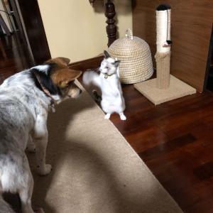 猫のナナ♬沖縄の宿