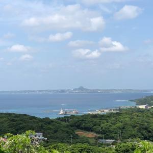 センダンの花♬沖縄