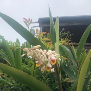今日から梅雨入り!!沖縄