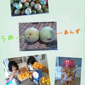 梅と杏子の違い