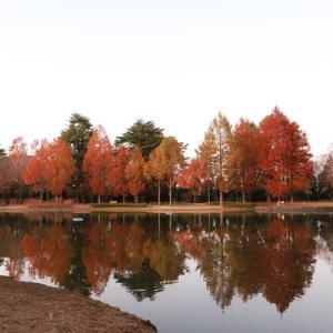 彩の森公園で夕暮れ散歩